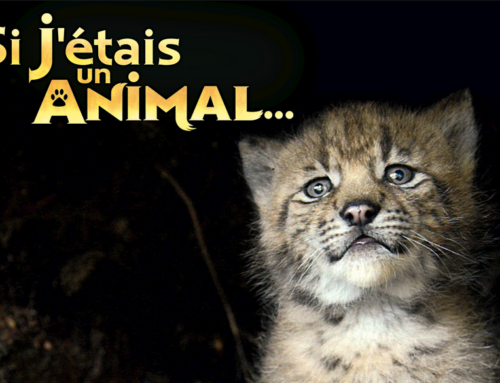 SI J'ETAIS UN ANIMAL (if I were an animal)